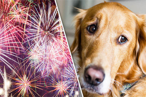 Dog Cowering and Fireworks